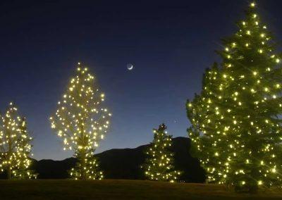 Peaceful Tree Lighting
