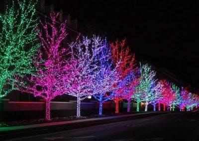 Vibrant-LED-Tree-Lights